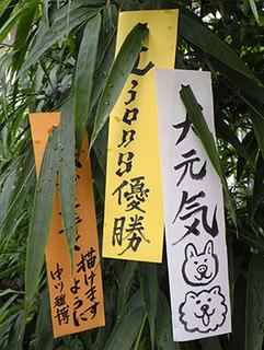 tanabata170706.jpg