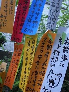 tanabata200707.jpg