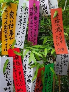 tanabata210707.jpg