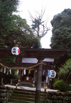 tsuchiya1007141.jpg