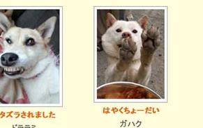 uchinoko130309.jpg
