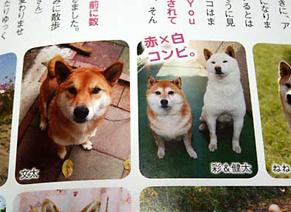 wan_1601102.jpg