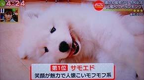 yojigoji190502.jpg