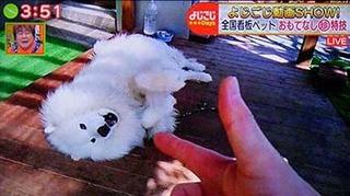 yojigoji2006081.jpg